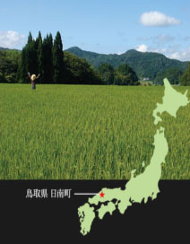 Rice_3